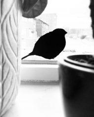 birdie_raam